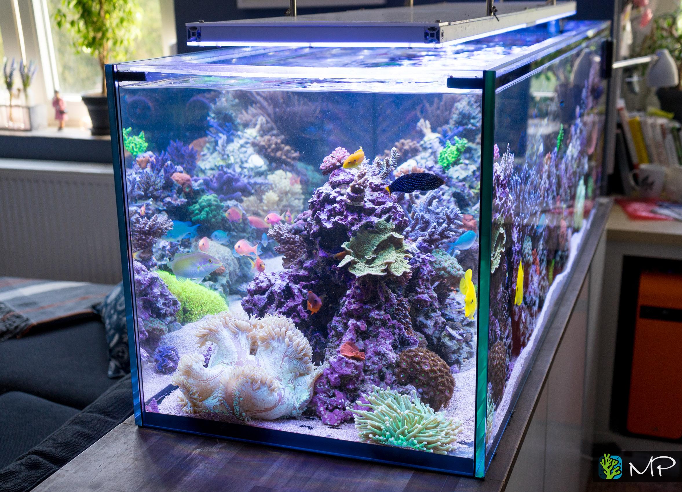 ein 400l raumteiler 150x50x50cm seite 5 aquarium vorstellung dein meerwasser forum f r. Black Bedroom Furniture Sets. Home Design Ideas