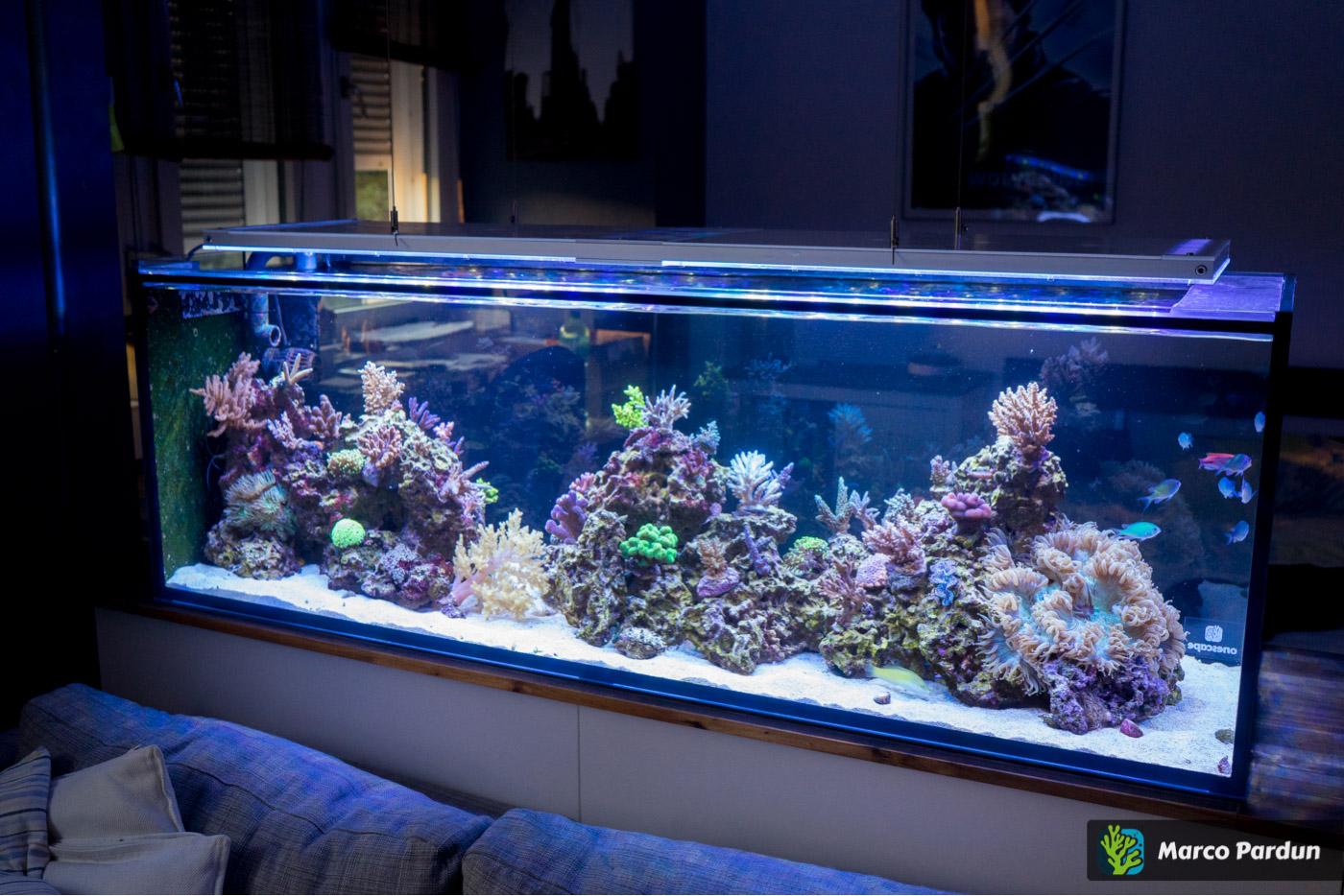 ein 400l raumteiler 150x50x50cm seite 4 vorbereitung dein meerwasser forum f r nanoriffe. Black Bedroom Furniture Sets. Home Design Ideas