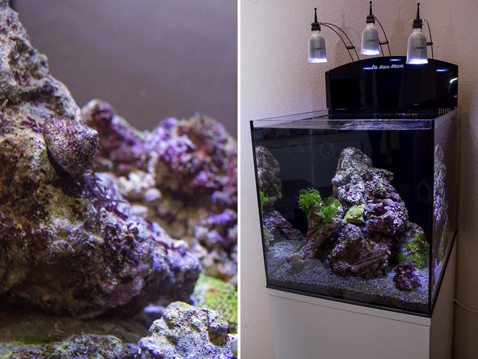 80l sollen es sein seite 3 vorbereitung dein meerwasser forum f r nanoriffe. Black Bedroom Furniture Sets. Home Design Ideas