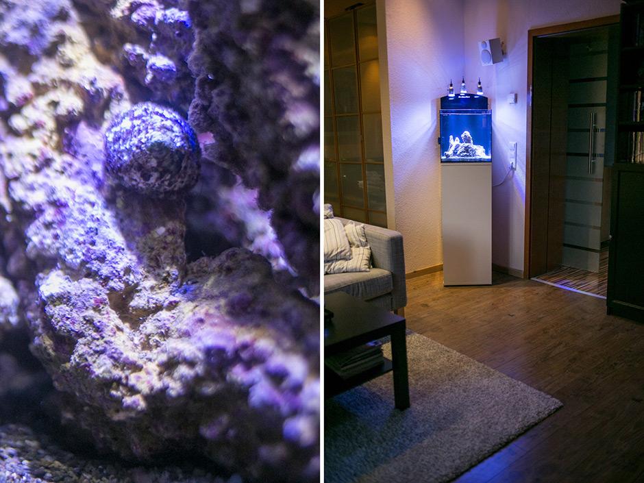 80l sollen es sein page 2 vorbereitung dein meerwasser forum f r nanoriffe. Black Bedroom Furniture Sets. Home Design Ideas